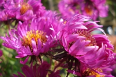 Aster-2-2010