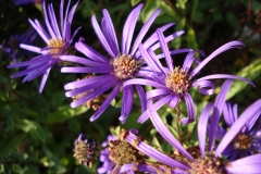 Aster-2010