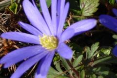 Frühling-Garten-2
