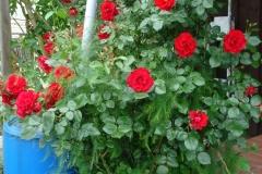 Garten-2-2010