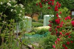 Garten-2010