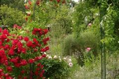 Garten-3-2010
