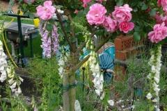 Garten-5-2010