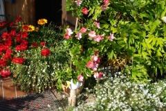 Garteneingang-3